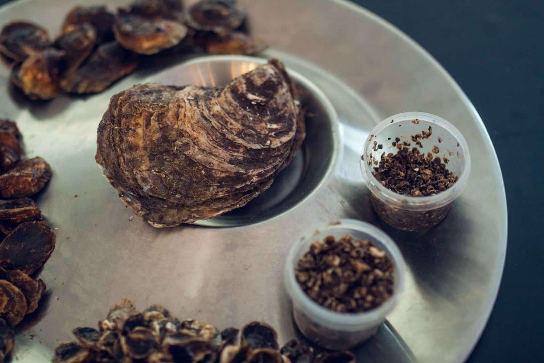 OysterFest(Web)-5