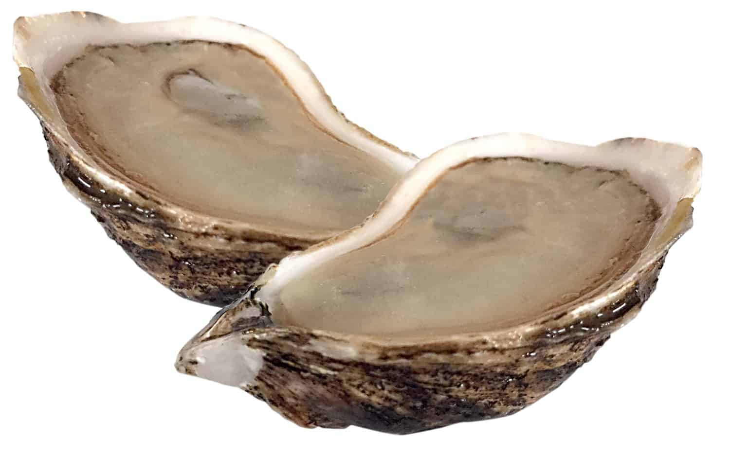 New 2 Oyster Full Meat